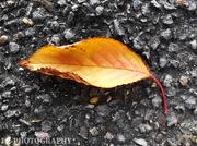 4th Nov 2020 - Nature's Golden Arrow