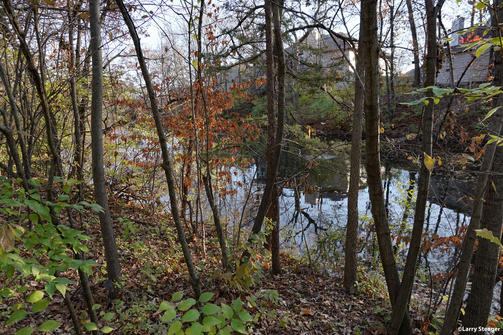 Small pond in back of homes by larrysphotos