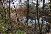 4th Nov 2020 - Small pond in back of homes
