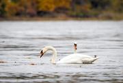 4th Nov 2020 - Fall on the river
