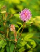 1st Nov 2020 - Hedgerow flower
