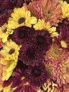 31st Oct 2020 - Autumn Flowers