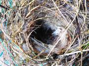 5th Nov 2020 - Not the best nest