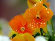 5th Nov 2020 - Decorated Petals