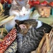 Farmer's Market Cuddlers