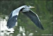 5th Nov 2020 - Taking flight