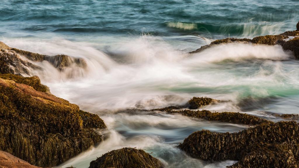 Acadia Shoreline by photograndma