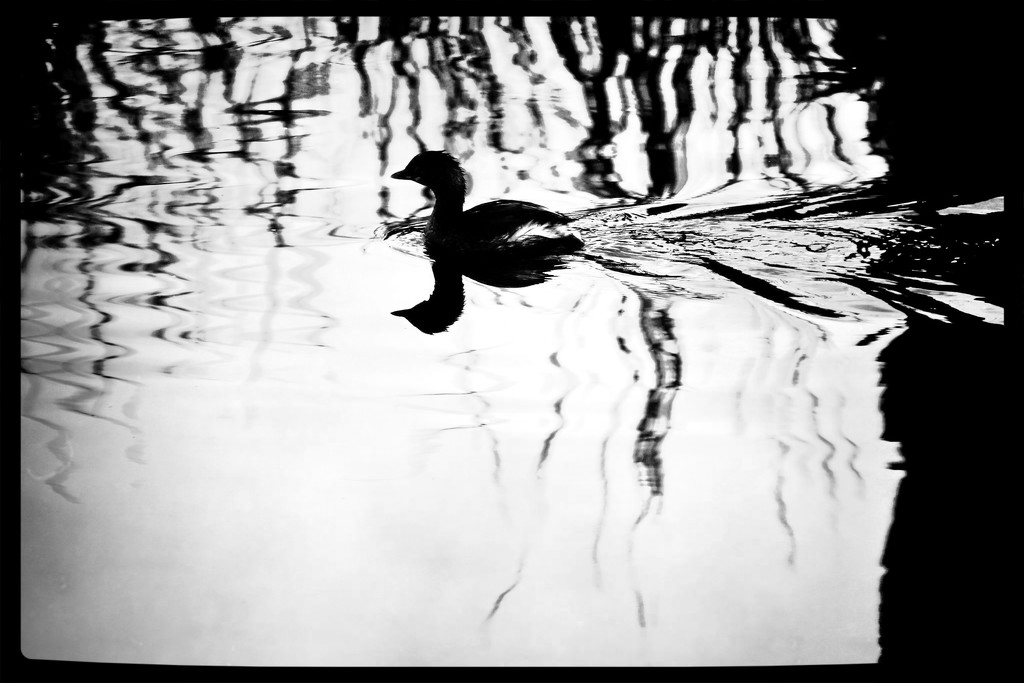 Tag challenge monochrome and reflection  by kathyboyles