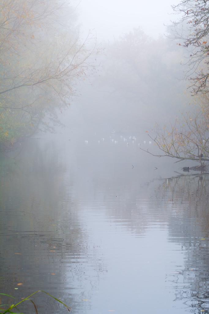 In the morning mist by rumpelstiltskin
