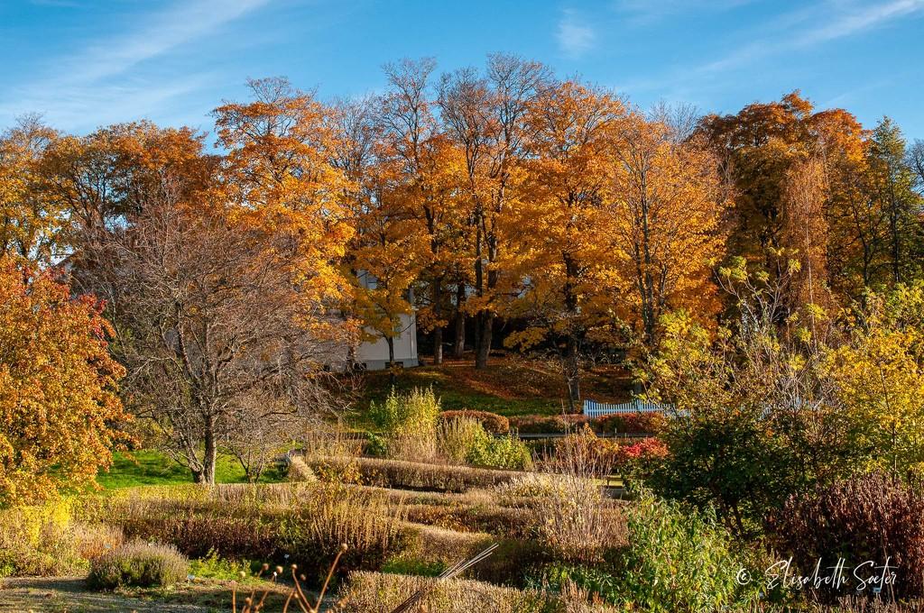 Autumn in Ringve Botanical Garden by elisasaeter