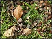 5th Nov 2020 - potential oak