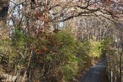 5th Nov 2020 - Walking path in fall