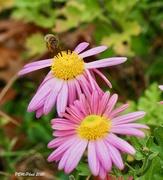 5th Nov 2020 - Busy Bee