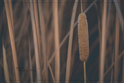 5th Nov 2020 - Reeds and Seeds