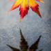 Leaf #2 by kwind