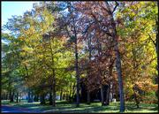 5th Nov 2020 - More Leaves to Fall