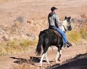 6th Nov 2020 - Horse Riding In The Bosque.