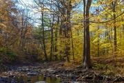 6th Nov 2020 - Fall By The Creek