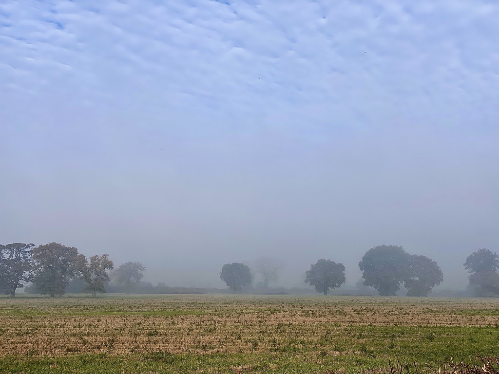 Misty by tinley23