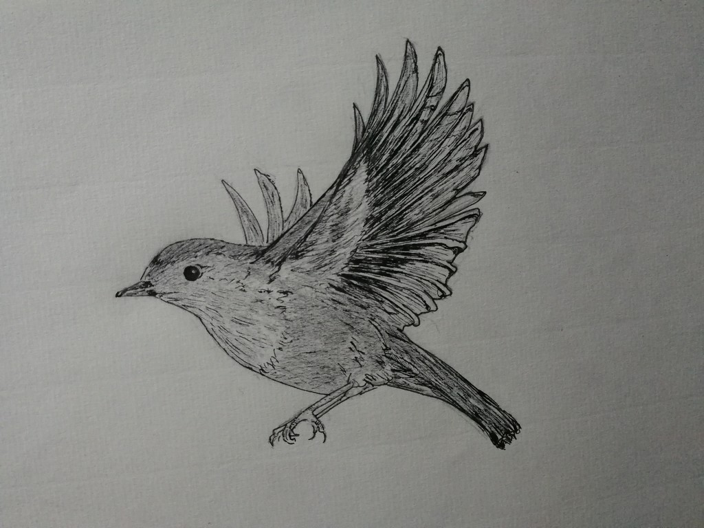 Doing one drawing a week this weeks word is flight by ilovelenses