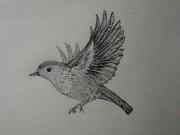 6th Nov 2020 - Doing one drawing a week this weeks word is flight