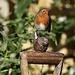Robin & Friend by carole_sandford