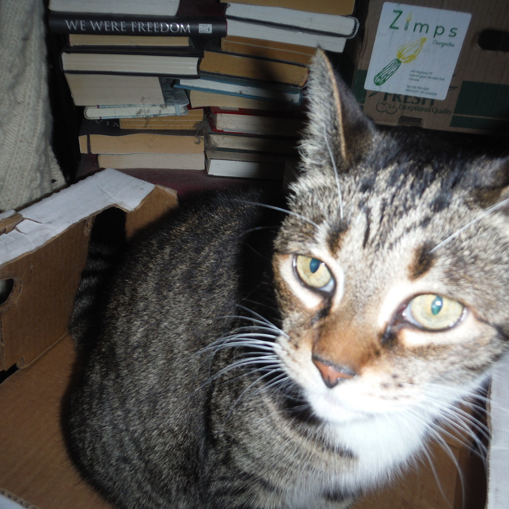 Kitty in a Box by spanishliz