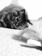 6th Nov 2020 - Gracie enjoying her Mouse