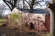 6th Nov 2020 - Tired old barn