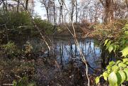 6th Nov 2020 - Pond area along the bike path