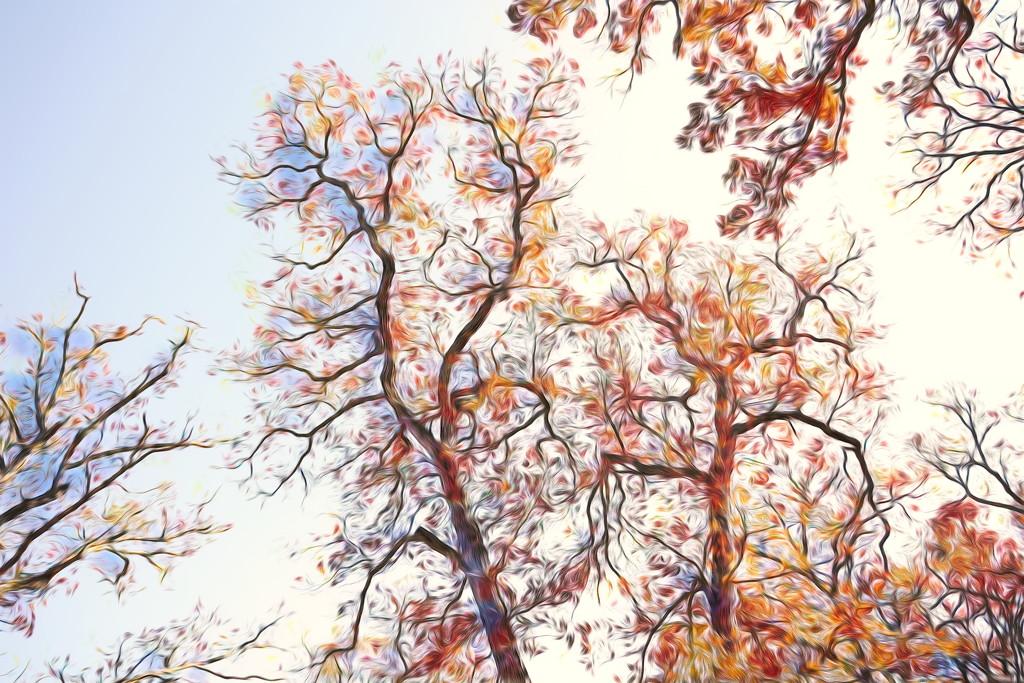 Trees by lynnz