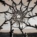 Tree Porthole  by stephomy