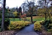 7th Nov 2020 - Dale-End Park