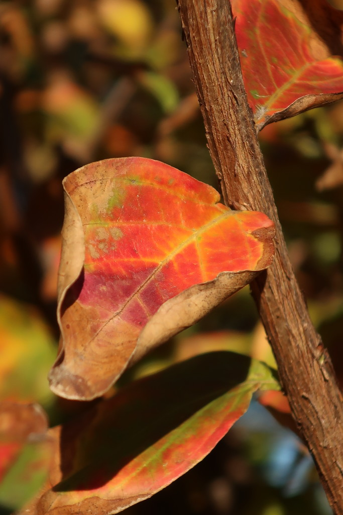 Leaf patterns by louannwarren