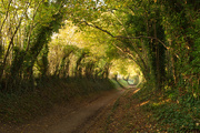 7th Nov 2020 - Halnaker Tree Tunnel - For Real