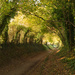 Halnaker Tree Tunnel - For Real by 30pics4jackiesdiamond