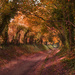Halnaker Tree Tunnel - Not for Real! by 30pics4jackiesdiamond