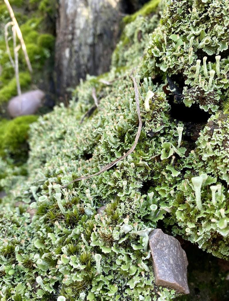 Just a bit of lichen by tinley23