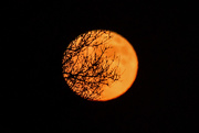 1st Nov 2020 - Branches over Blue Moon