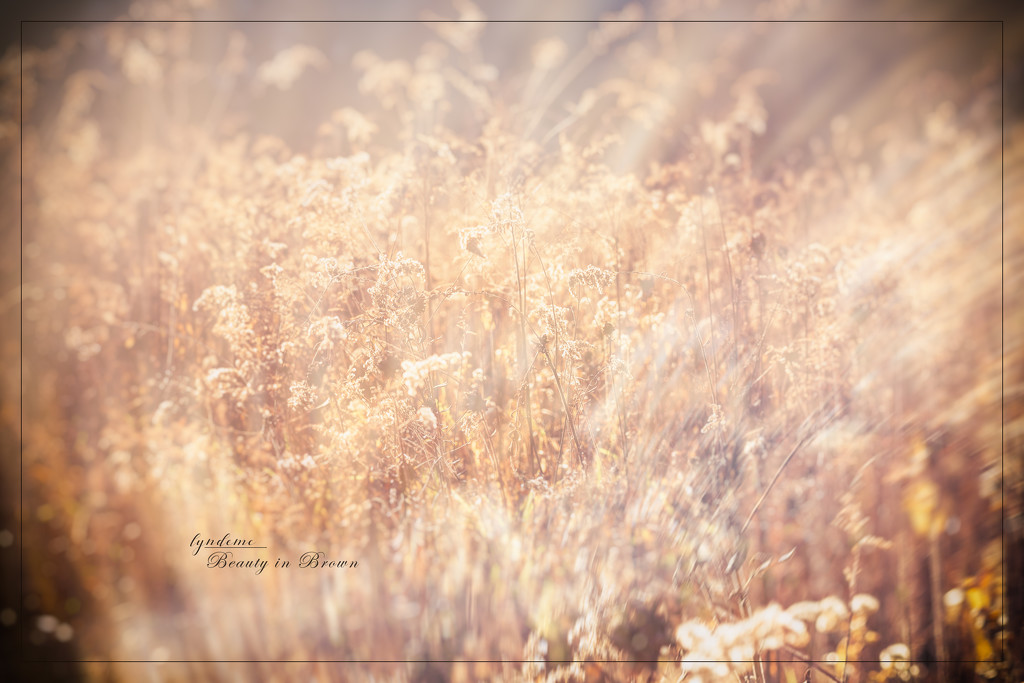 In a Field of Weeds by lyndemc