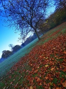 7th Nov 2020 - Autumn in the Woods