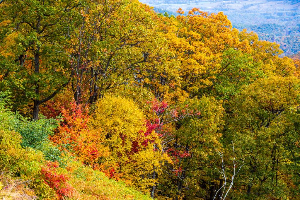 Shenandoah Fall Colors by photograndma