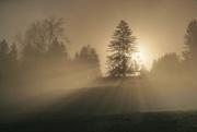 7th Nov 2020 - 2020-11-07 escaping the fog