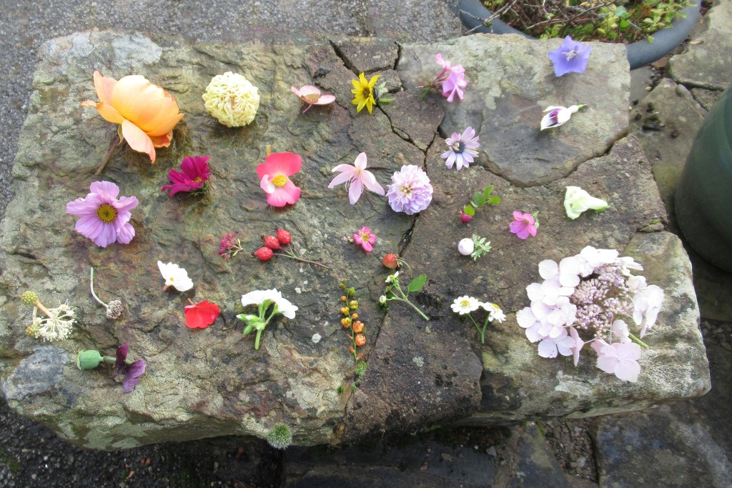 flower grid by anniesue