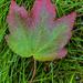 Leaf Pattern by k9photo