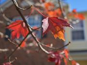6th Nov 2020 - Autumn at my house