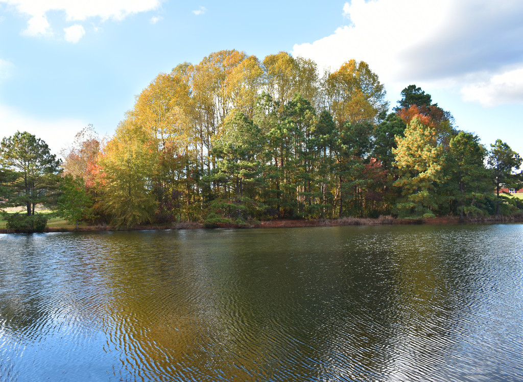 Autumn pond view by homeschoolmom