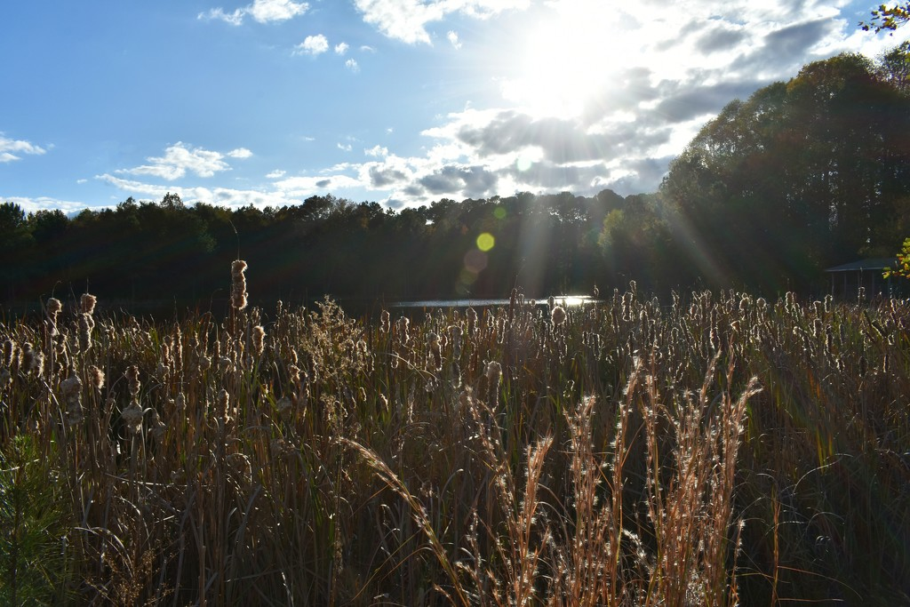 Sunshine on a lovely autumn day by homeschoolmom