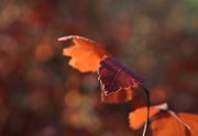 6th Nov 2020 - Autumn