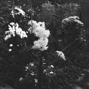 8th Nov 2020 - Autumn flowers in the garden